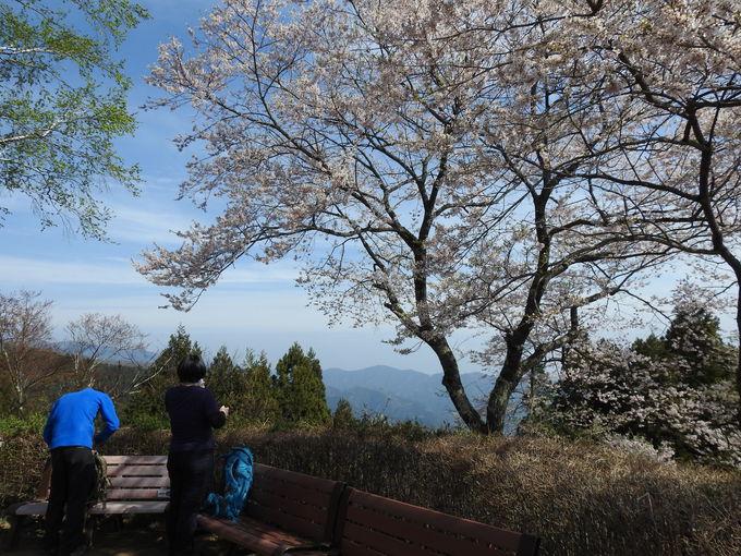 春の御岳山ハイキング。他にもこんなところを要チェック!