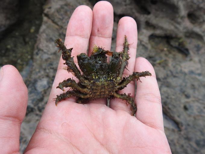 天神島に住まう生きものを、手に持って観察してみよう!