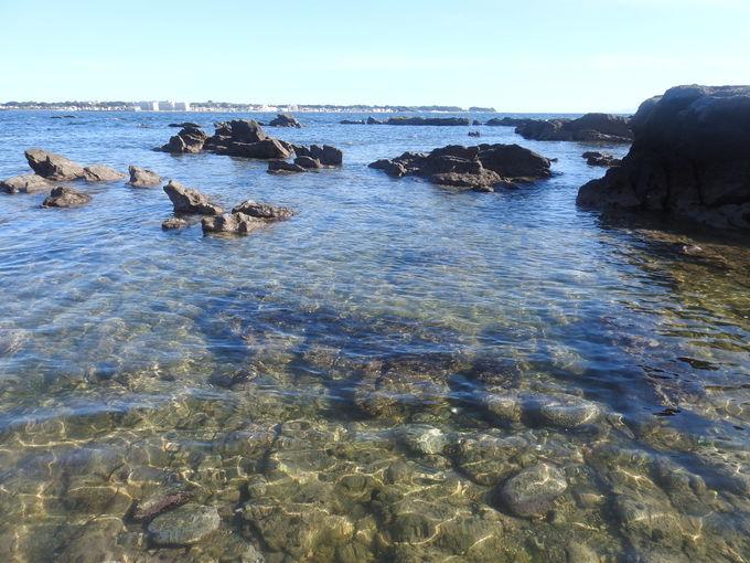 橋を渡れば、そこは海の生きものたちの楽園!