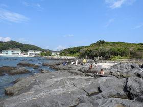 まるで小さな江の島!横須賀の天神島で磯の生きものを探そう