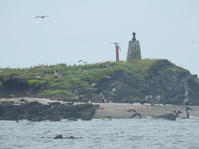 自然地ならではの注意点を踏まえて、天神島を楽しもう