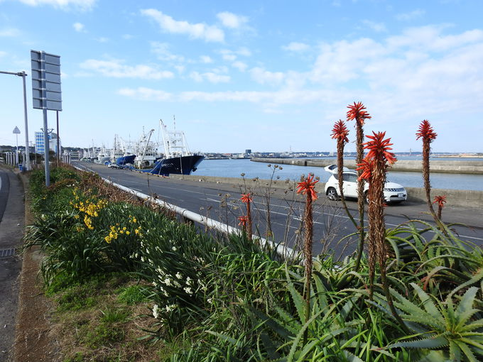 いざ日本最大の水揚げ量を誇る漁業の町へ!