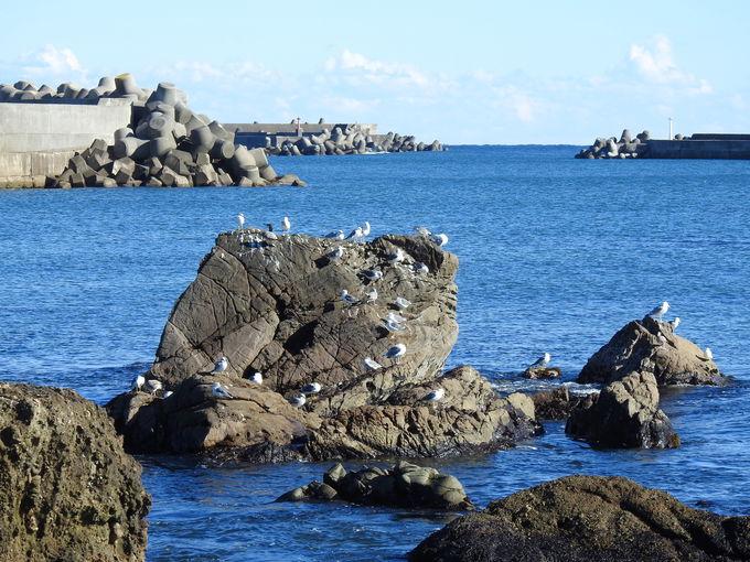 広い広い銚子漁港。カモメは一体どこにいるのか?