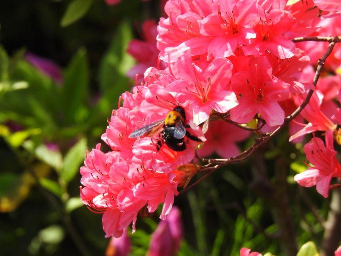 花と緑いっぱいの伊佐沼公園でピクニックも!