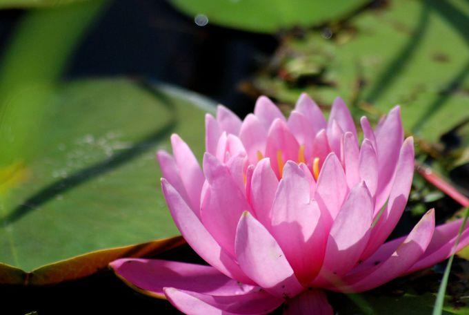 春から夏へ、時季に合わせて数々の花が咲き誇る