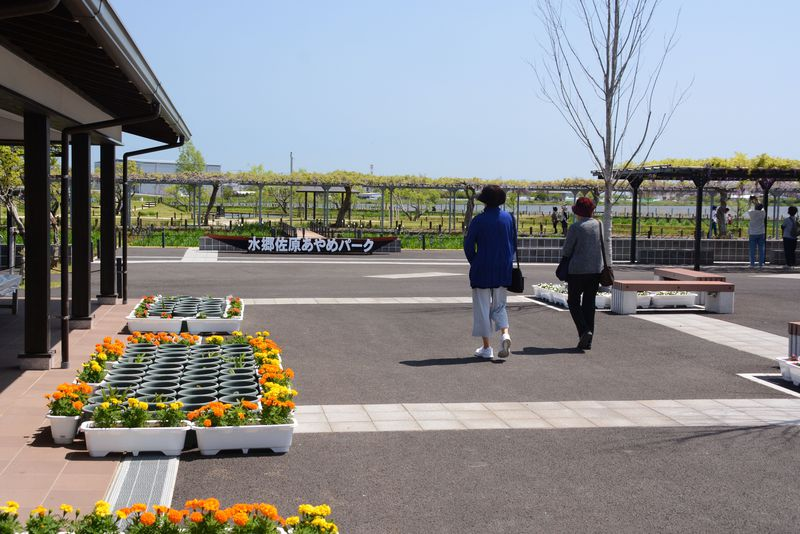 リニューアルオープンの「水郷佐原あやめパーク」は見どころいっぱい!