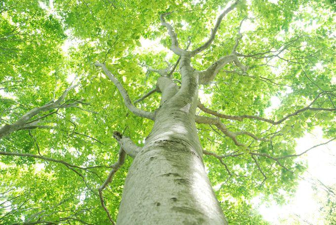 ブナ林での森林浴でリラックス体験