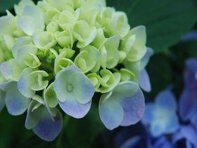 春から初夏が見頃!千葉県茂原市 花巡り彩りスポットベスト3