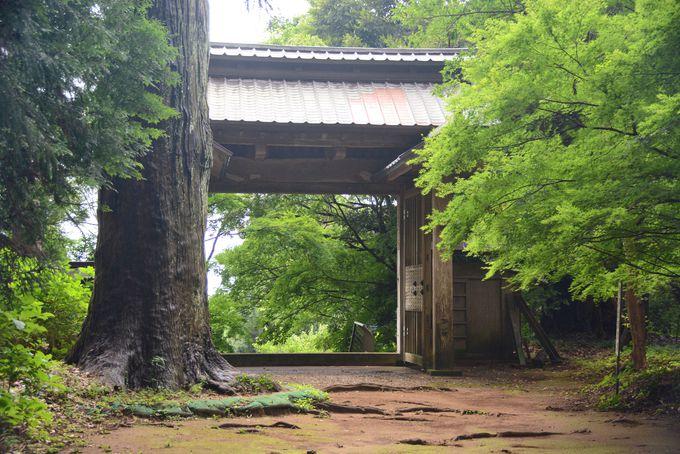 ここは僧侶の学問所。300年の歴史を誇る飯高檀林跡(飯高寺)