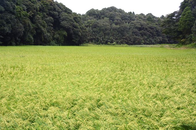 緑の濃淡が鮮やか!日本の里山百選の谷津田を歩く