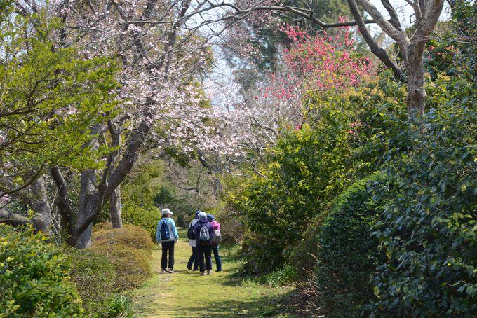 季節感があふれる、樹木に囲まれた散歩道を歩く