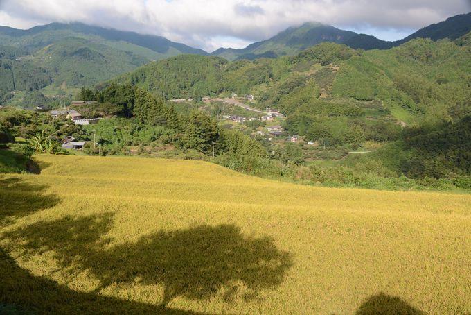 神社周辺の石畳地区の里山を散策しよう