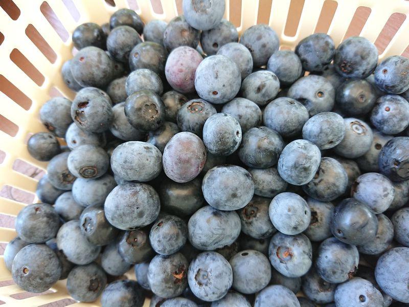 美しい里山でブルーベリー摘み!木更津市の農園「のらり・くらり」