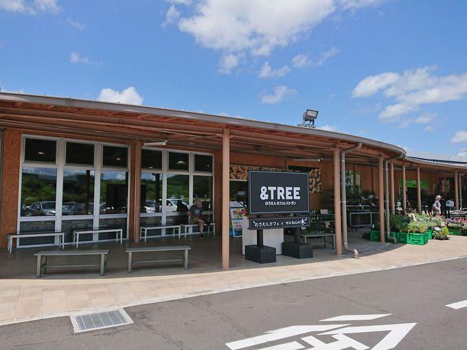 ここに寄ってみたい!道の駅うまくたの里のカフェ「&TREE]