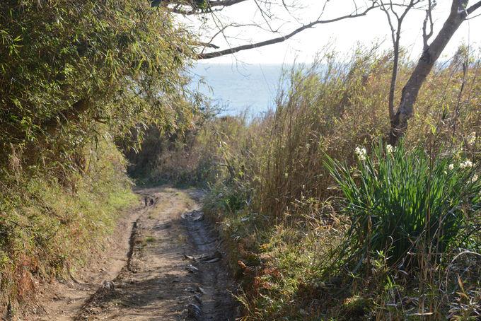 さあ、小浦海岸へ向けての散歩道の始まり!