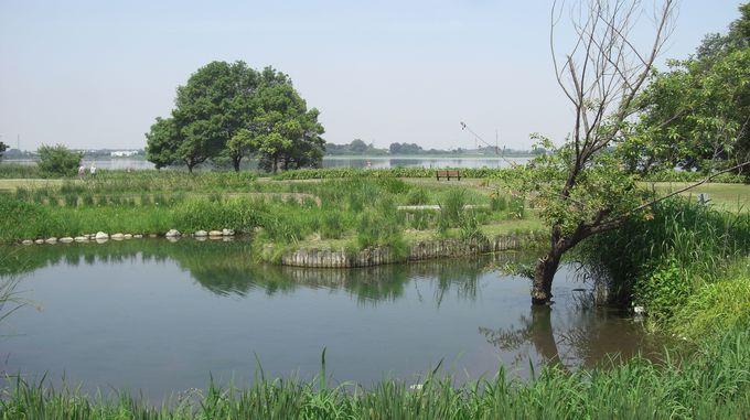 美術館から多々良川沿いに歩くと、そこに多々良沼が現れます