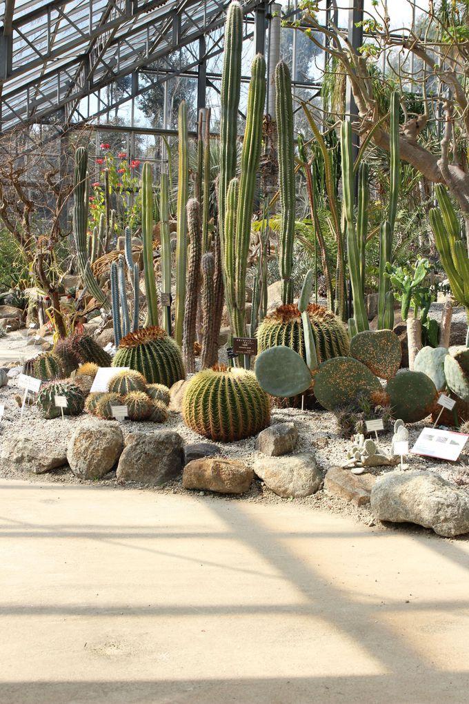 どうしてあんな形をしているの?日本では考えられない植物が並ぶ!サバンナ温室