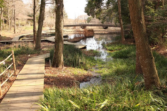 水生植物の池は沢や湿地、水田やため池が再現され、色々な植物を見ることができます
