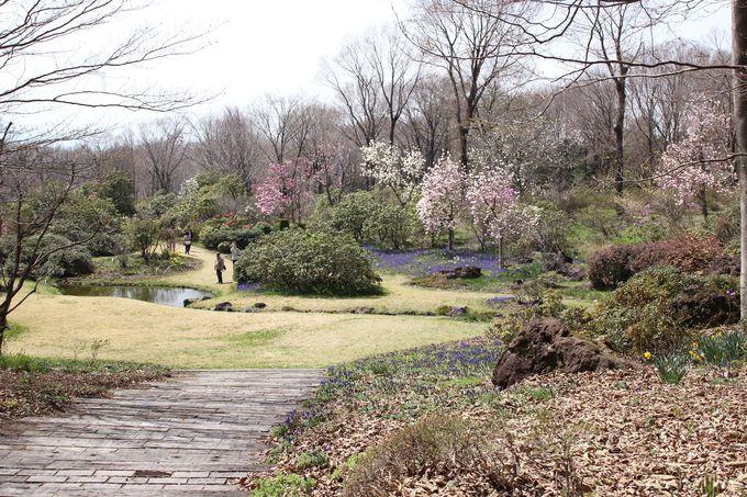 シャクナゲやミツバツツジ、水仙などの四季折々の花が迎えてくれる!セゾンガーデン
