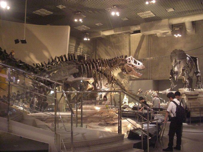 トリケラトプス、ティラノサウルス、ステゴサウルス!地下1階はジュラシックワールド!!
