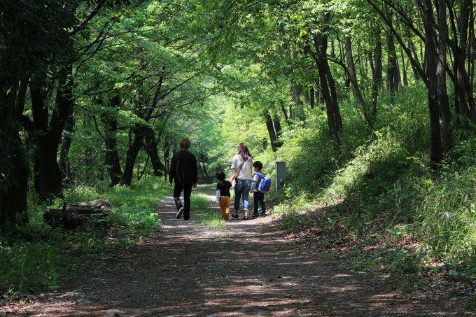 赤城の自然が残る「雑木林ゾーン」!カブトムシに会いたければクヌギ、コナラを探せ!!