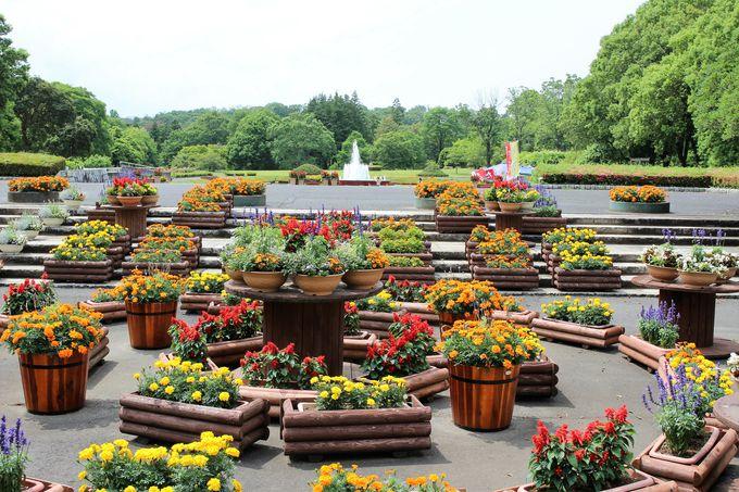 約5万本の植物とイベントが楽しい!メイン施設の「茨城県植物園」