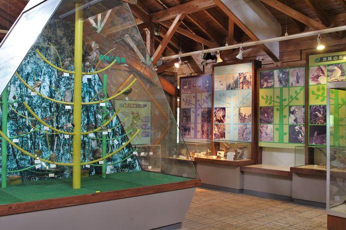 森林の働きから、茨城に棲む動物や植物昆虫の展示がある「森のカルチャーセンター」