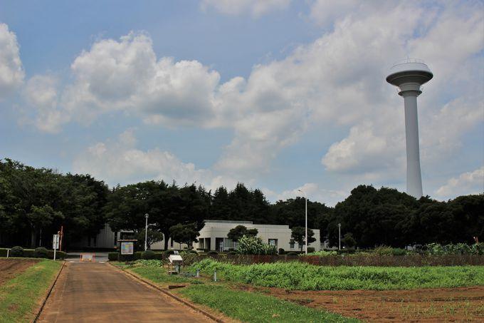 天皇陛下がお手植えをする稲や、今では姿を消した作物が栽培される「食物見本園」
