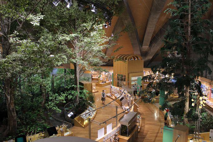 実際のブナで作ったジオラマや尾瀬シアターがある「群馬の自然と環境」