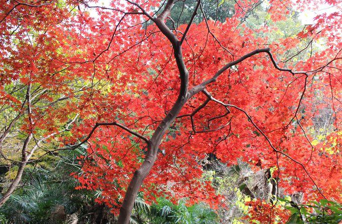 武蔵野の自然を残す自然教育園は紅葉の穴場スポット!晩秋の付属自然教育園
