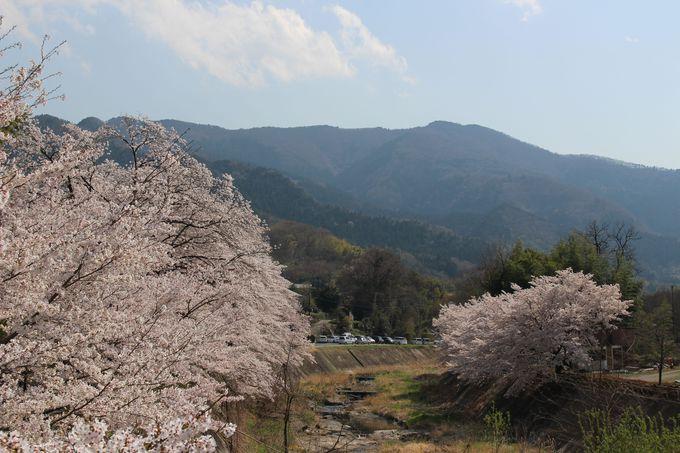 武家屋敷に楽山園!甘楽総合公園を雄川沿いを散策
