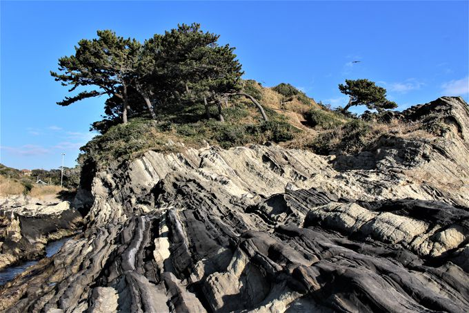 砂岩と凝灰岩の「鬼の洗濯板」!潮風の丘から望む荒崎