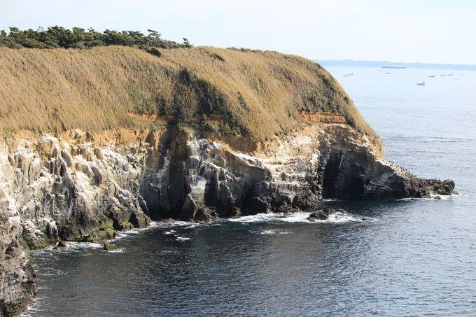 馬の背洞門や海鵜の崖!城ケ崎公園から見える海は東京湾