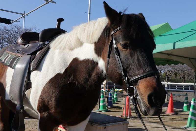 「古河市ネーブルパーク」ポニー牧場に絵付け体験!キャビンも人気
