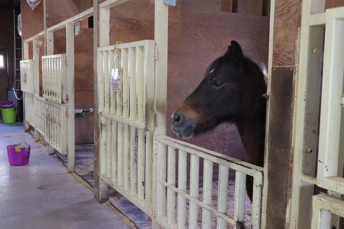 ポニー牧場で引馬や、乗馬、えさあげ体験