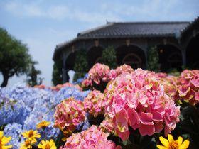 梅雨を彩る長崎の代表花を楽しもう!「紫陽花まつり」