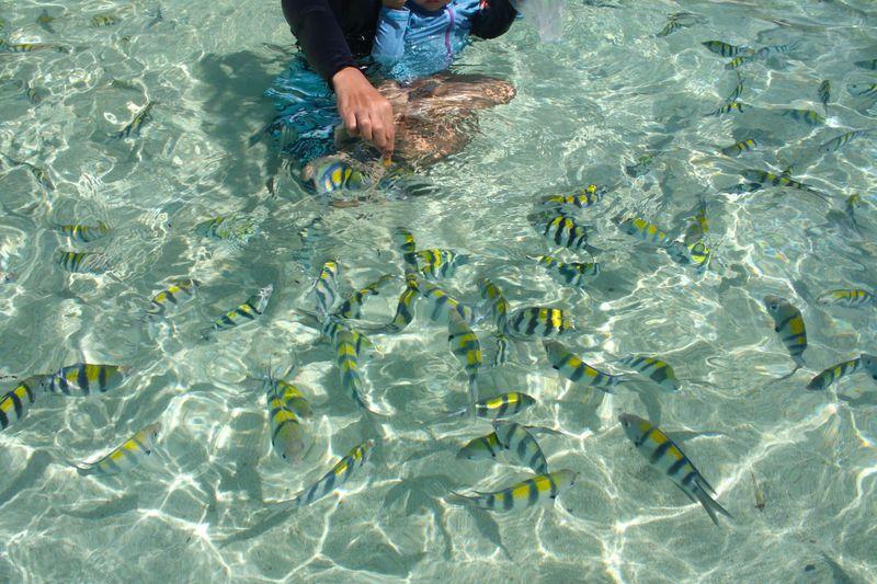 見せてあげたい透明な海!「セブ島」で無理のない子連れ旅行
