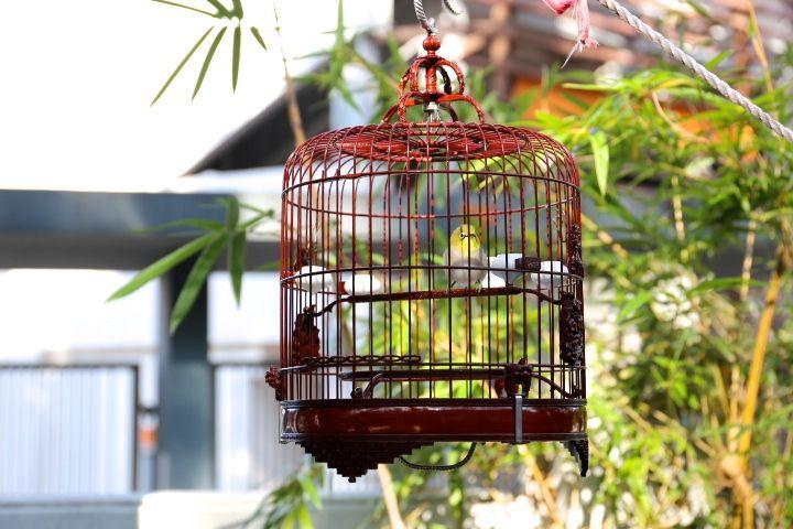美声の小鳥からギョッとするようなエサまで