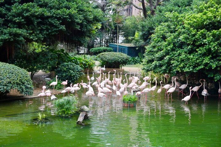 遊具で遊び、動物も見れる立地抜群の「九龍公園」