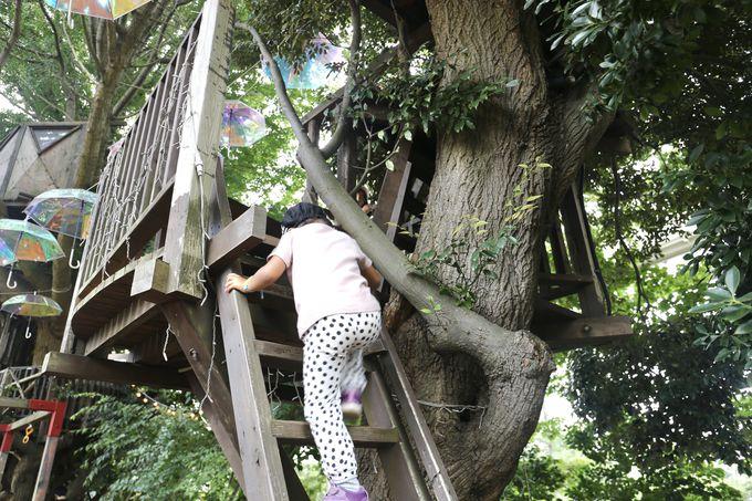 実際にツリーハウスに上ってみよう!