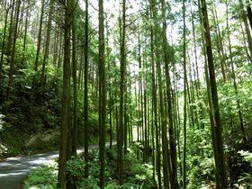 究極の田舎体験!和歌山県那智勝浦町色川エリアの生きる力
