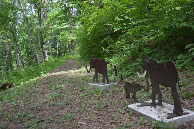 「癒しの森」 象の小径にカッコウが鳴くかもしれない