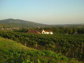 ブドウ畑パノラミックドライブ〜ハンガリーワインの里を訪ねて〜