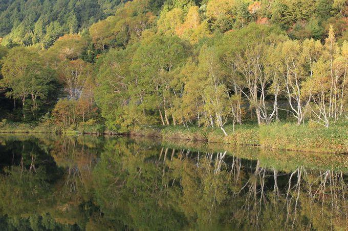 志賀高原の秋・森と池が織りなす錦秋美