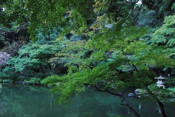 参拝の後は成田山公園の散歩も。紅葉の見どころでもあります。