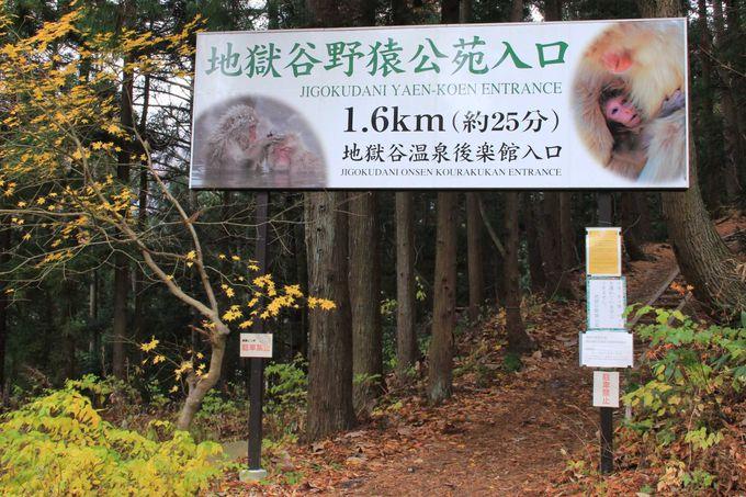 森の中を歩いて、地獄谷野猿公苑へ