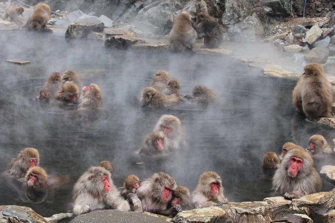 湯けむりに包まれる露天風呂と、くつろぐお猿たち