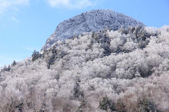 山に咲き誇る氷の花