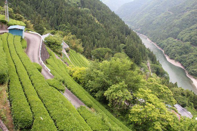 長野・静岡・愛知3県を結ぶ飯田線 秘境を走るのんびり鈍行列車の旅