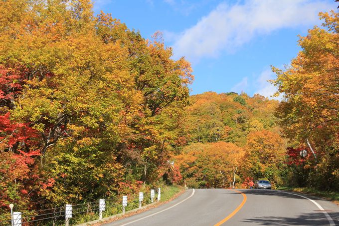 紅葉の中を行くメインルートは志賀草津高原道路